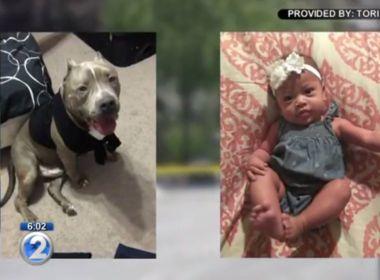 Pitbull é sacrificado nos Estados Unidos depois de matar bebê de seis meses