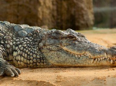 Pastor é devorado por crocodilos ao 'imitar' Jesus andando sobre as águas