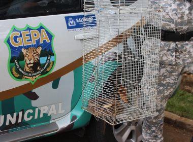 Guarda Municipal já capturou 70 cobras desde início do ano