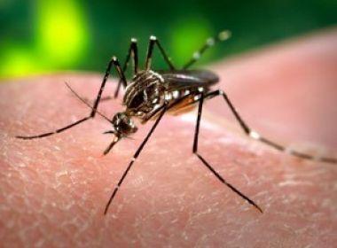 Proprietário de imóvel com foco de Aedes aegypti poderá pagar multa de R$ 500