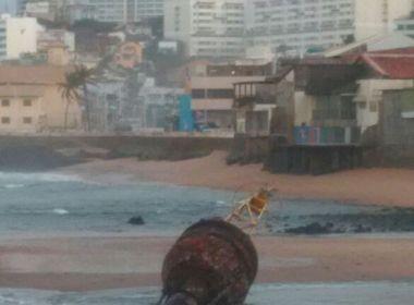 Com ventos e ressaca, boia de 6 toneladas se desprende e é encontrada na Barra