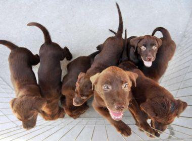 Vereadora propõe que cartórios façam 'certidão de nascimento' para cães e gatos em Salvador