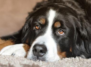 Justiça ordena retirada de cordas vocais de cães por 'latirem demais'