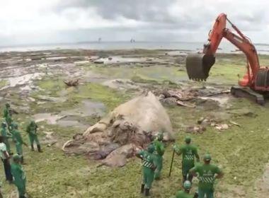 Carcaça de baleia que encalhou na região da praia da Boa Viagem é retirada do local