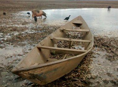 Lagoa marginal do rio São Francisco seca e deixa 3 milhões de peixes mortos na Bahia