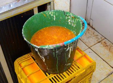 Feirantes vendem frangos coloridos artificialmente como galinhas caipiras