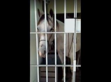Cavalo é preso após dar coice em carro e passa a noite em delegacia de Sergipe