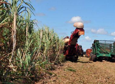 PIB baiano cresce 0,1%; setor agropecuário é responsável pela estabilidade