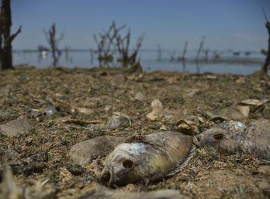 Um terço da região Nordeste enfrenta grau mais elevado de seca