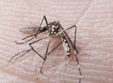 Animais e células-tronco são usadas em pesquisas sobre vírus Zika
