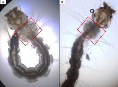 Estudantes de São Paulo criam detergente capaz de eliminar larvas do Aedes aegypti