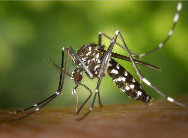 Brasil registra 802.429 casos prováveis de dengue, diz Ministério da Saúde