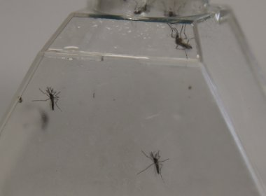 Estudo aponta variação específica do vírus Zika em Salvador
