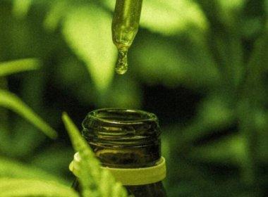 Província da Argentina autoriza uso do óleo da maconha para tratamento de epilepsia