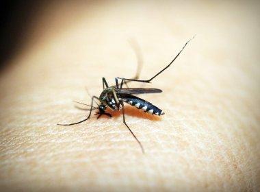 Ministério da Saúde adverte que chikungunya deve ser o pior problema do verão
