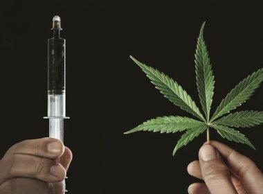 Anvisa irá discutir uso de derivado de maconha em medicamentos