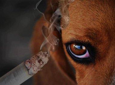 Médicos alertam sobre risco de cigarro à saúde dos animais de estimação