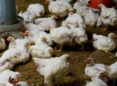 Terceiro caso de gripe aviária é confirmado na China