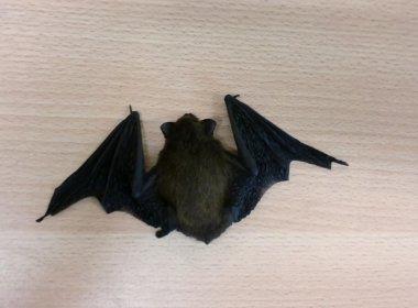 Paramirim: Após mordida de morcego, homem morre vítima de raiva