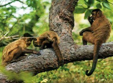 Salvador confirma morte de macacos por febre amarela em Vila Laura, Itaigara e Paripe
