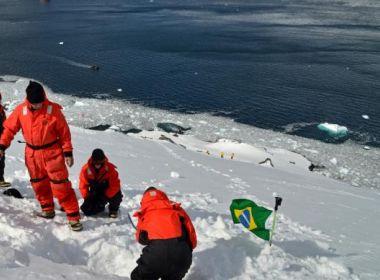 Fungos da Antártida são usados em pesquisa para medicamento contra dengue