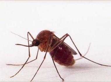 Pernilongo também pode transmitir Zika, aponta pesquisa da Fiocruz