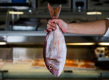 Comer peixe leva a um sono melhor, segundo pesquisa
