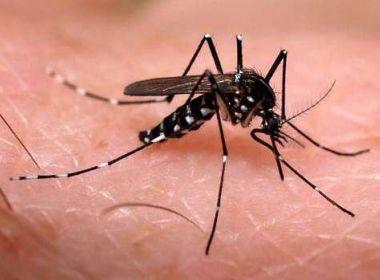 Salvador apresenta redução no Índice de Infestação Predial do Aedes aegypti