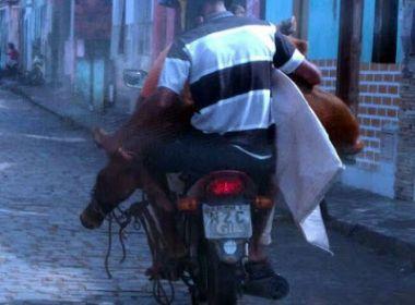 Bezerro é flagrado em motocicleta
