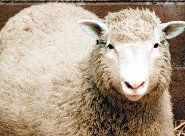 Dolly: Primeira clonagem de animal a partir de célula adulta completa 20 anos