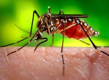 Casos de chikungunya aumentam 88% em um mês no Brasil
