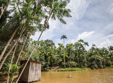 Plenário do STF retoma julgamento sobre o novo Código Florestal