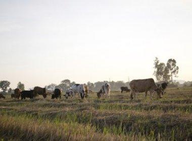 Justiça Federal obriga Ibama a fiscalizar atividades agrícolas no Oeste da Bahia
