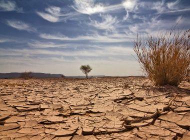Pelo extenso período de seca, Uauá tem situação de emergência reconhecida pelo MI