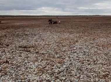 Xique-Xique: Seca em 'cemitério de peixes' atinge cerca de 2 mil pessoas