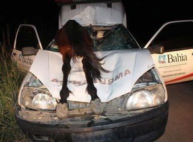 Medeiros Neto: Ambulância atropela cavalo que fica pendurado em para-brisa
