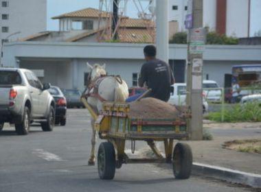 Conquista: Cavalos vão usar 'fraldão' para evitar fezes em vias públicas