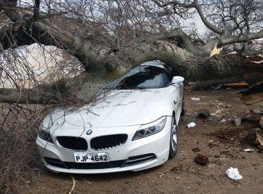 BMW e outros dois veículos são danificados após queda de árvore em Jacobina