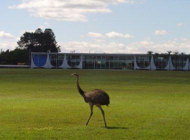 Planalto quer gastar R$ 116 mil com rações para animais de residências oficiais