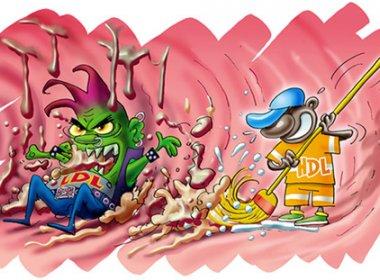 Colesterol HDL, até então considerado bom, pode aumentar risco de doenças cardíacas