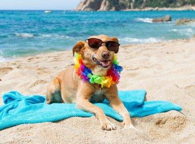 Cachorros ganham praia própria com bar em cidade na Croácia
