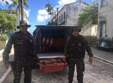 Polícia apreende lagostas e detém três por venda irregular