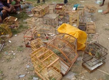 Operação contra venda ilegal de aves silvestres prende 10 pessoas na Baixa do Fiscal