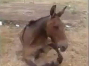Criança chora e cuida de burro abandonado após ter pata quebrada