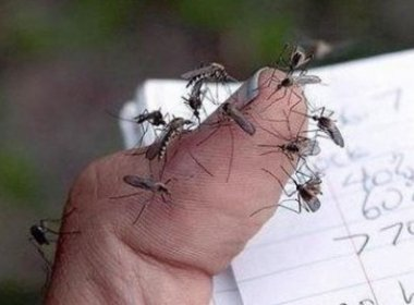 Fiocruz de Pernambuco suspeita que muriçoca também seja vetor do zika vírus
