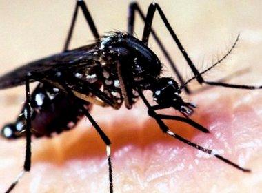 Pernambuco confirma primeira morte causada pela febre chikungunya