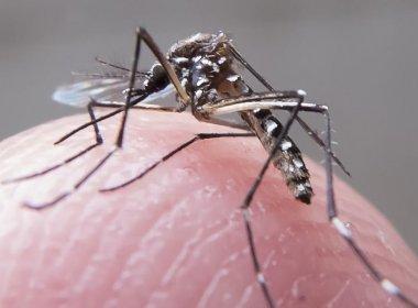 Salvador registra menor índice de infestação para Aedes aegypti dos últimos 12 anos